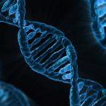 STEAM Homeschool: Genes and Me