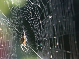 Animal Encounters at the PlayHouse: Spiders