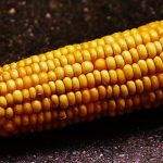 Ag in the Classroom: Let's Get Corny