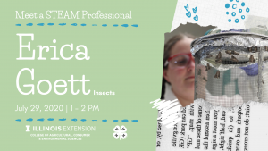 Meet a STEAM Professional: Insects, how can we stop them from bugging us?